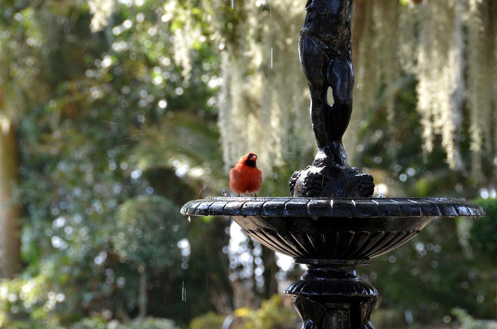 cardinalfountain